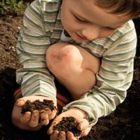 The Advantages of Laminated PLANTI